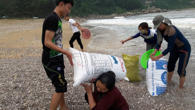 Chưa có kết quả phân tích sò lông dạt vào biển Hà Tĩnh - ảnh 2