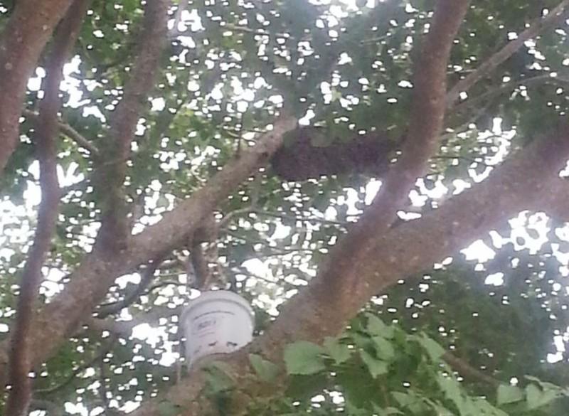Ong rừng tấn công 15 học sinh và người dân nhập viện - ảnh 2