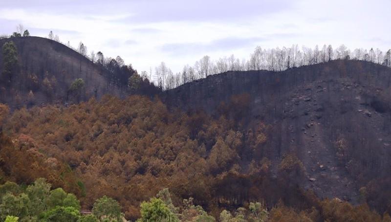 Chùm ảnh: Cận cảnh nơi cháy rừng lớn, người tử vong  - ảnh 7