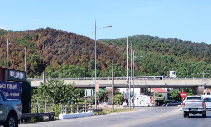 Chùm ảnh: Rừng thông Hồng Lĩnh 'chết đứng' sau cháy rừng - ảnh 3