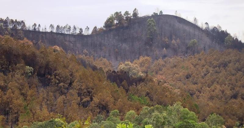 Chùm ảnh: Cận cảnh nơi cháy rừng lớn, người tử vong  - ảnh 8