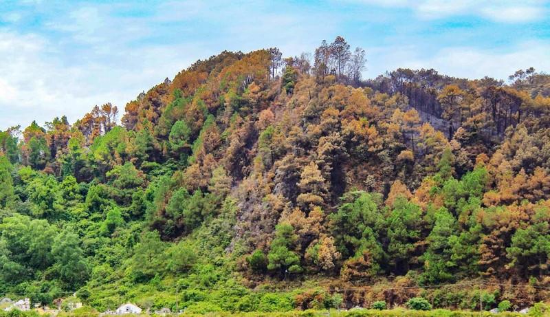 Chùm ảnh: Rừng thông Hồng Lĩnh 'chết đứng' sau cháy rừng - ảnh 9