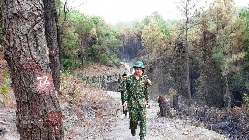 Chùm ảnh: Rừng thông Hồng Lĩnh 'chết đứng' sau cháy rừng - ảnh 10