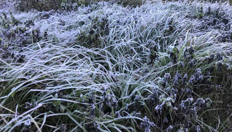 Tuyết, băng giá phủ trắng núi đồi miền núi Nghệ An  - ảnh 11