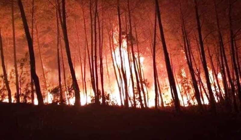 Hơn 1.000 người ngăn vụ cháy rừng lan xuống sát nhà dân  - ảnh 1