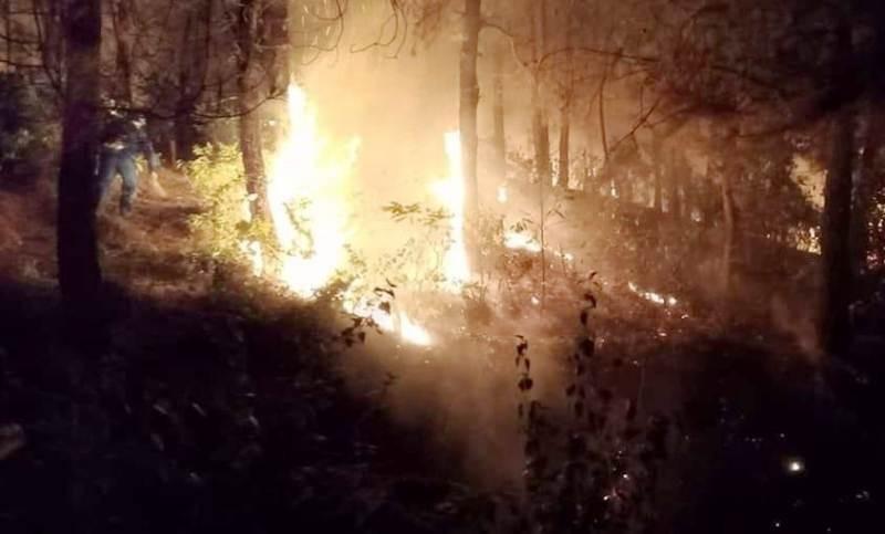 Cháy rừng bùng phát trở lại ở Nghệ An - ảnh 2