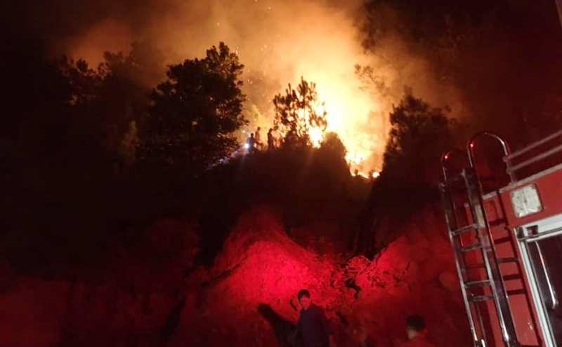 Đang cháy rừng, lửa bốc lên ngùn ngụt bên quốc lộ 1A - ảnh 2