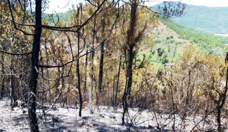Xử lý người đứng đầu nếu để xảy ra cháy rừng - ảnh 1