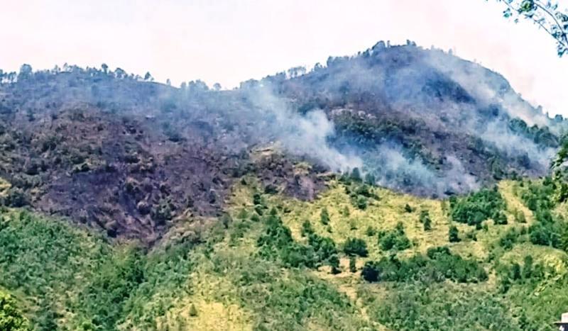 Xử lý người đứng đầu nếu để xảy ra cháy rừng - ảnh 2