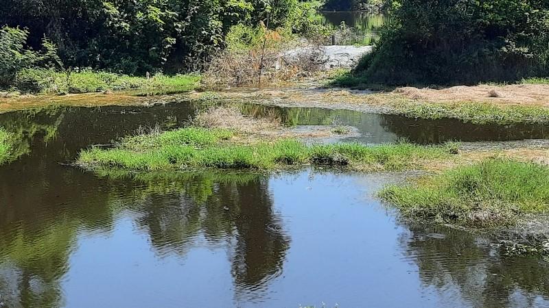 Dân phản đối trại heo gây ô nhiễm, lãnh đạo huyện họp khẩn - ảnh 2