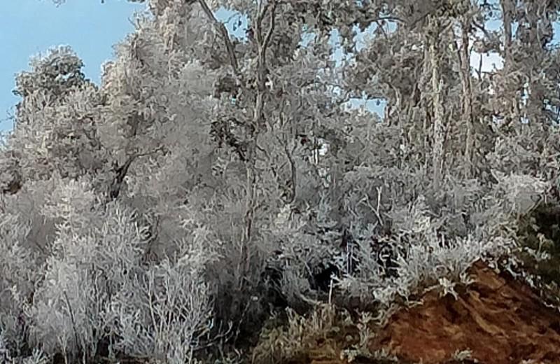 Chùm ảnh: Băng tuyết phủ trắng miền núi xứ Nghệ như châu Âu  - ảnh 1