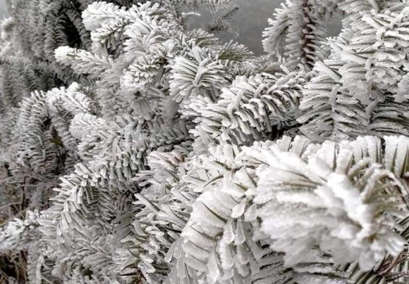 Chùm ảnh: Băng tuyết phủ trắng miền núi xứ Nghệ như châu Âu  - ảnh 8