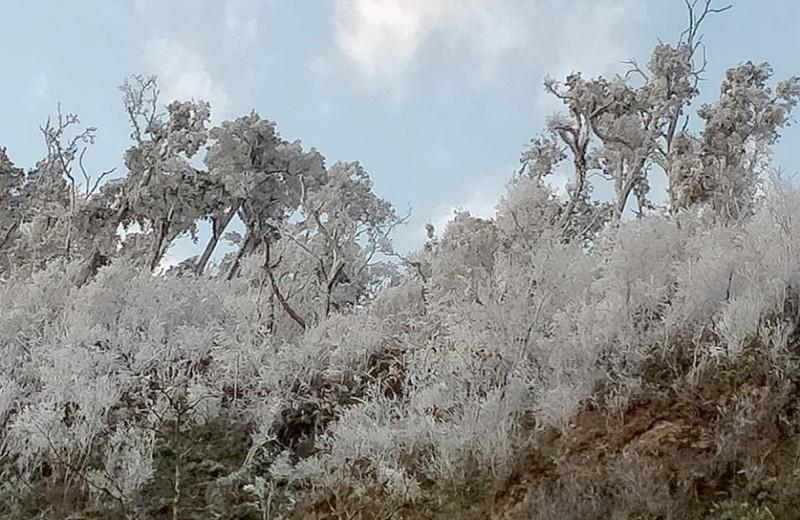 Chùm ảnh: Băng tuyết phủ trắng miền núi xứ Nghệ như châu Âu  - ảnh 7