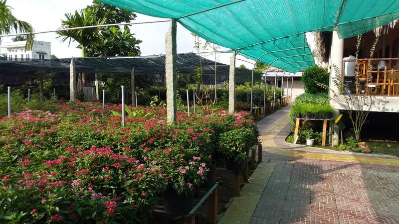 Checkin làng hoa Sa Đéc trước giờ trăm hoa đua nở - ảnh 9