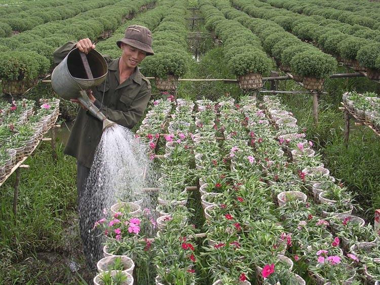 Checkin làng hoa Sa Đéc trước giờ trăm hoa đua nở - ảnh 4
