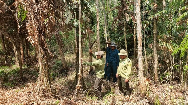Nguy cơ cháy rừng tại miền Tây ở mức 'cực kỳ nguy hiểm' - ảnh 1