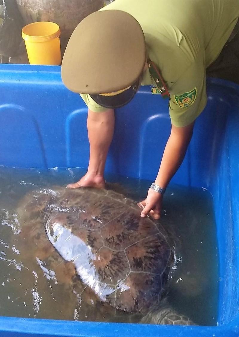 Rùa khủng ở Cà Mau được ngư dân thả về biển - ảnh 1