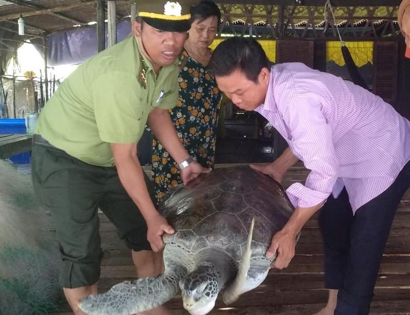 Rùa khủng ở Cà Mau được ngư dân thả về biển - ảnh 2