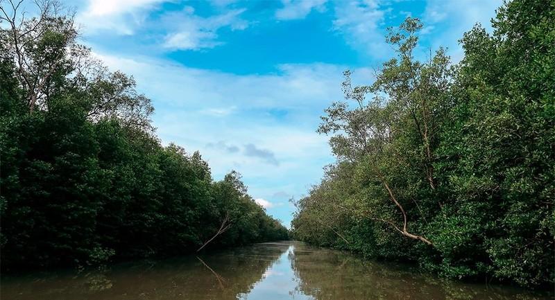 Điều tra dấu hiệu lập quỹ trái phép ở Vườn Quốc gia Mũi Cà Mau - ảnh 1