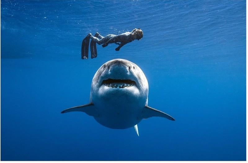 Có dễ 'thoát nạn' khi đang bơi gặp cá mập? - ảnh 1