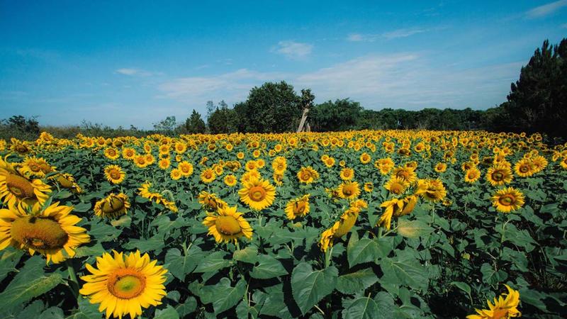 Đà Lạt mùa nắng ấm và những khu vườn không thể bỏ lỡ   - ảnh 3