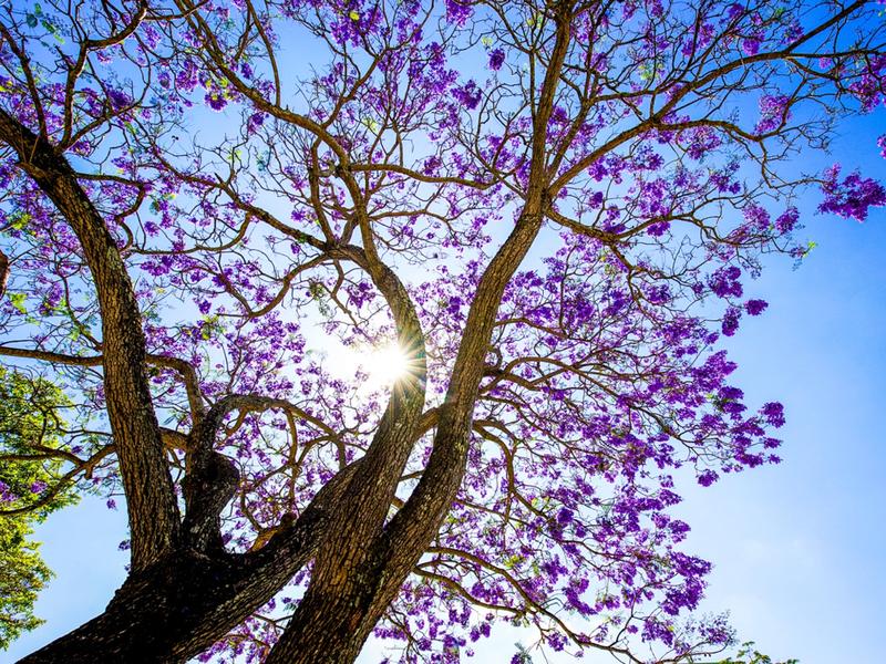 Đà Lạt mùa nắng ấm và những khu vườn không thể bỏ lỡ   - ảnh 1