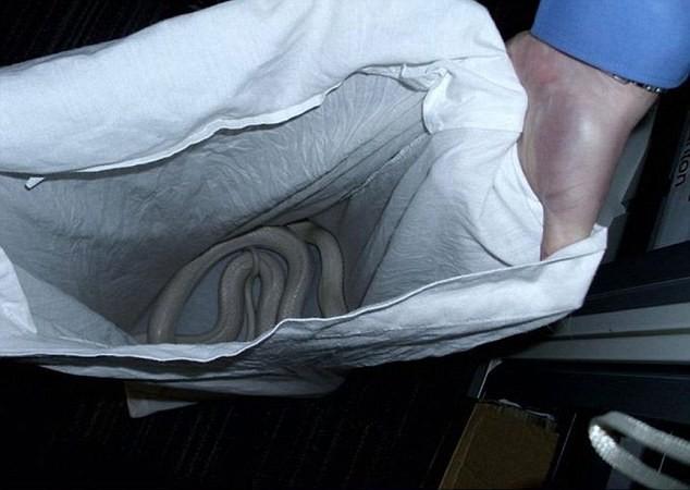 Kinh hoàng: Phát hiện rắn trắng dài gần 2m trong nhà tắm - ảnh 3