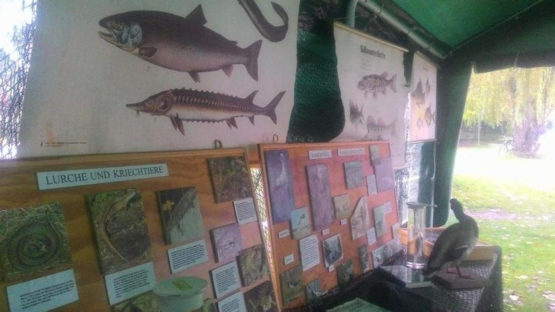 Khám phá lễ hội cá tại Đức - ảnh 10