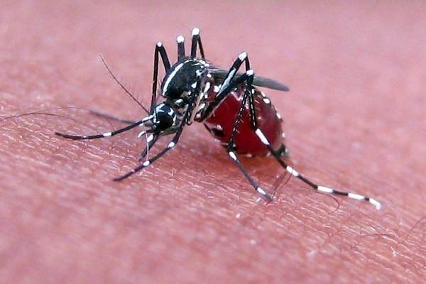 Trái đất nóng lên làm nhiều virus giết người sống lại - ảnh 7