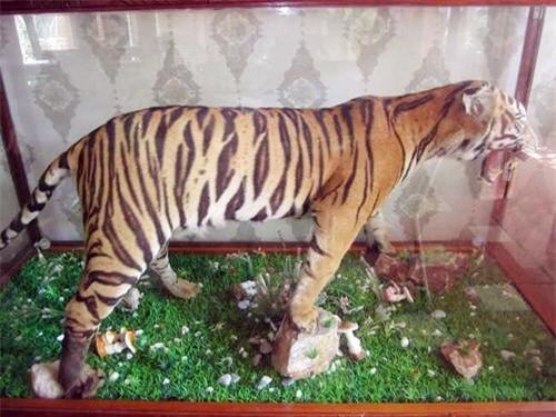 """Phát hiện cả """"vườn thú"""" hoang dã, quý hiếm trong quán cafe - ảnh 1"""