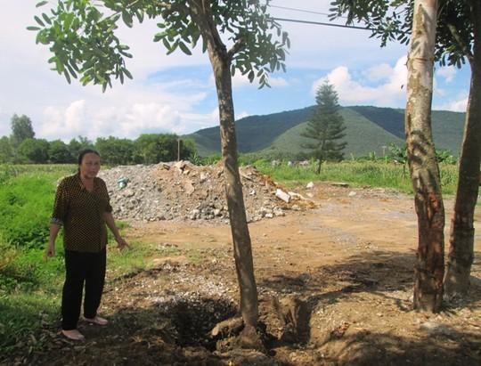 Số cây xà cừ xảy ra tranh chấp giữa gia đình bà Sâm với ông Phát