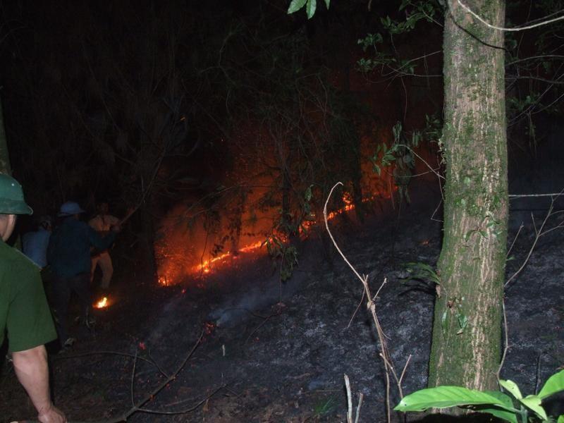 Hạt phó kiểm lâm hy sinh sau khi nỗ lực chữa cháy rừng - ảnh 1