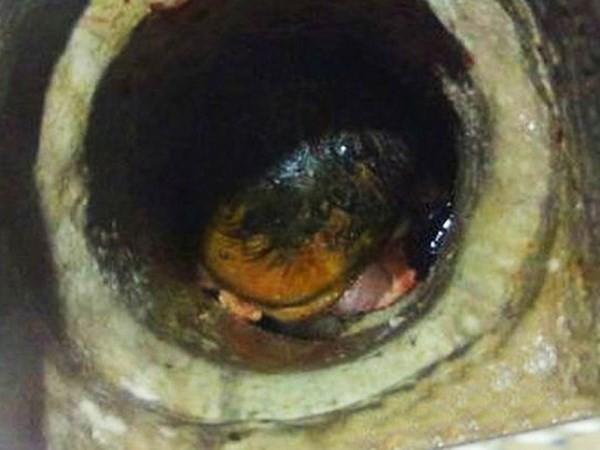 Kỳ công giải cứu bé sơ sinh bị mẹ bỏ rơi trong ống thoát nước - ảnh 1