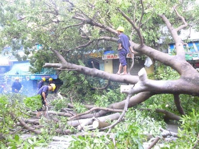 Mưa lớn làm đổ cây xà cừ cổ thụ tại trung tâm TP.HCM - ảnh 4