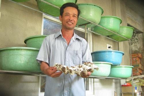 Anh Nguyễn Văn Hưng bên khay dế vàng đã được vài tuần tuổi