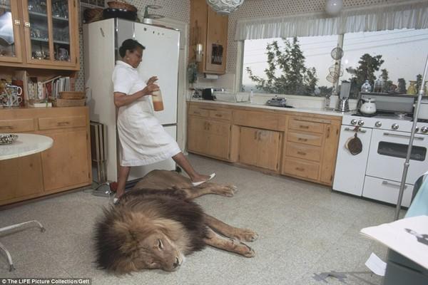 Gia đình kỳ lạ nhiều năm nuôi sư tử như thú cưng trong nhà 8