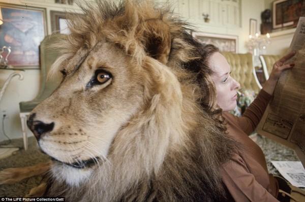 Gia đình kỳ lạ nhiều năm nuôi sư tử như thú cưng trong nhà 2