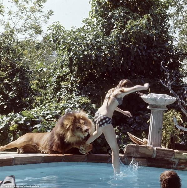 Gia đình kỳ lạ nhiều năm nuôi sư tử như thú cưng trong nhà 4