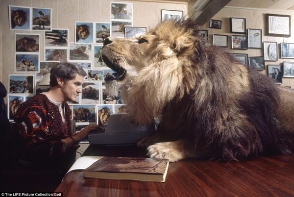 Gia đình kỳ lạ nhiều năm nuôi sư tử như thú cưng trong nhà 3