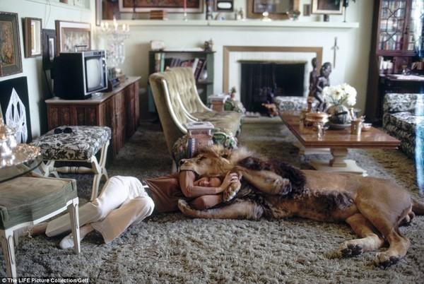 Gia đình kỳ lạ nhiều năm nuôi sư tử như thú cưng trong nhà 5