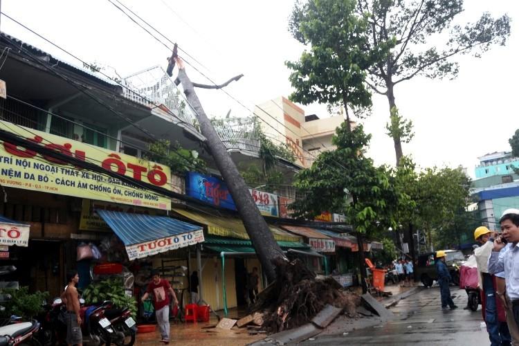TPHCM: Mưa giông, hàng loạt cây xanh bật gốc đè sập nhà và ô tô - ảnh 1