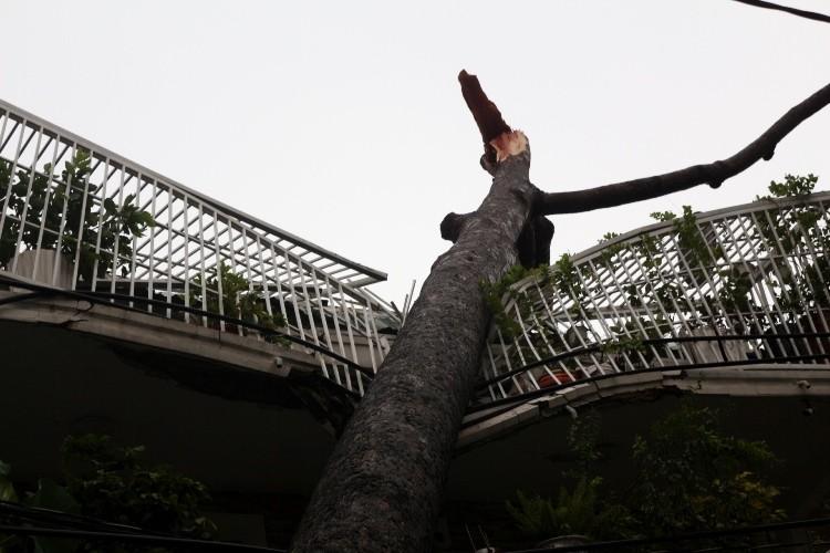 TPHCM: Mưa giông, hàng loạt cây xanh bật gốc đè sập nhà và ô tô - ảnh 2