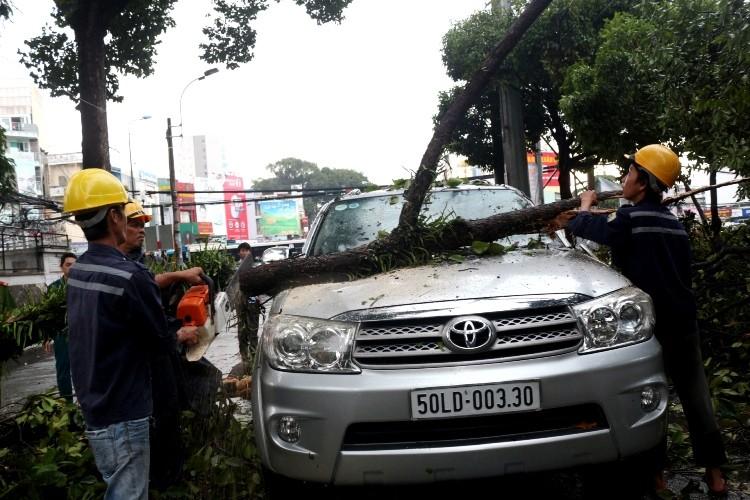 TPHCM: Mưa giông, hàng loạt cây xanh bật gốc đè sập nhà và ô tô - ảnh 5