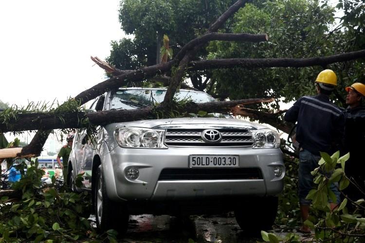 TPHCM: Mưa giông, hàng loạt cây xanh bật gốc đè sập nhà và ô tô - ảnh 6