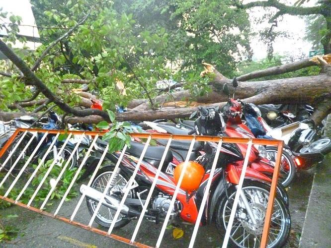 TPHCM: Mưa giông, hàng loạt cây xanh bật gốc đè sập nhà và ô tô - ảnh 8