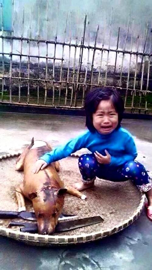"""Câu chuyện xúc động về bức ảnh """"cô bé khóc bên chú chó bị giết thịt"""" - ảnh 1"""