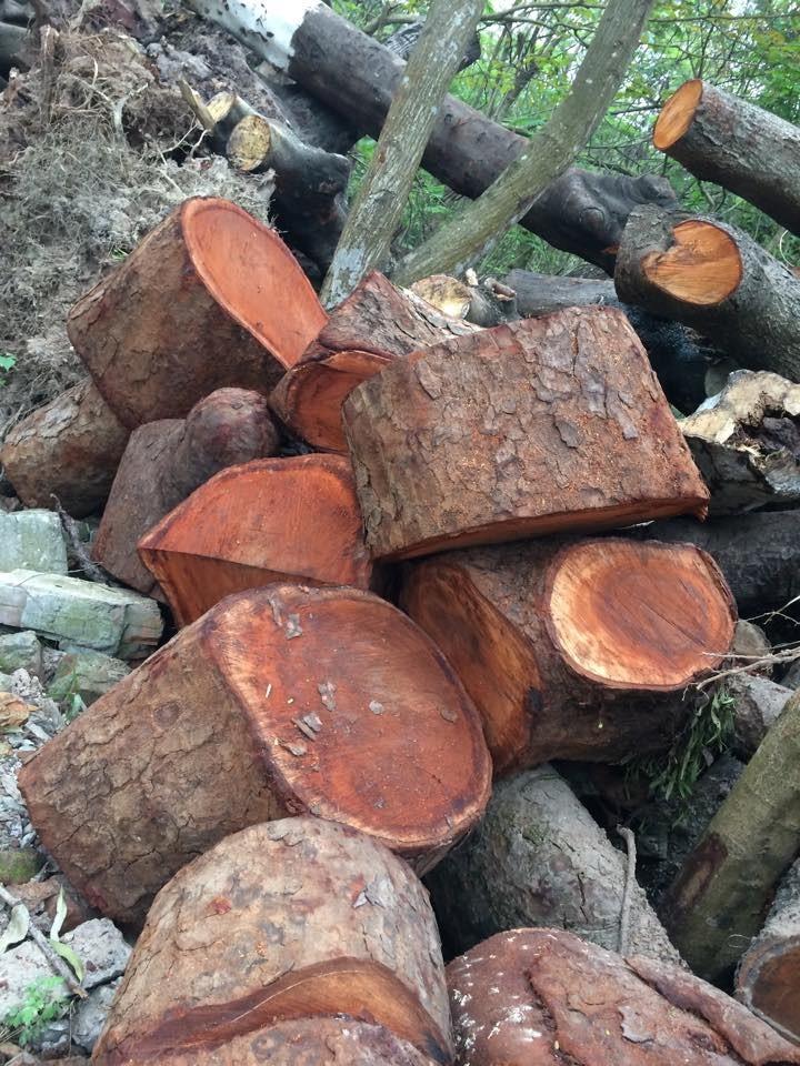 Mới: Công bố kết luận thanh tra vụ thay thế cây xanh ở Hà Nội - ảnh 2