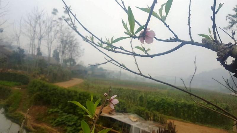 Tết của người dân tộc Tày ở Thái Nguyên - ảnh 4