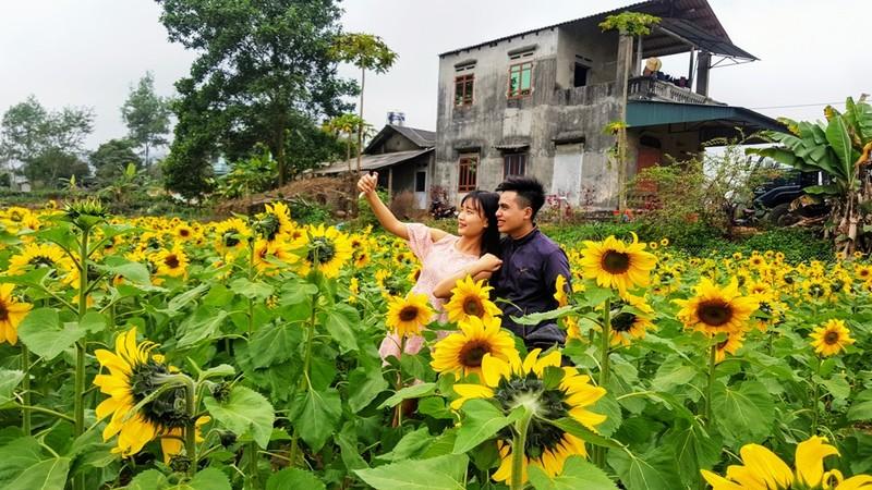 Người dân đổ xô đi chụp ảnh với hoa hướng dương - ảnh 3