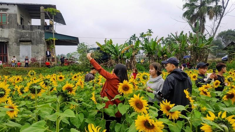 Người dân đổ xô đi chụp ảnh với hoa hướng dương - ảnh 6